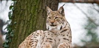 Dzikie zwierzęta w Polsce